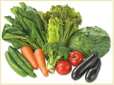 大地を守る会(大地宅配)の野菜セット「ベジタ」