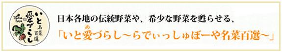 radish-mezurashi2
