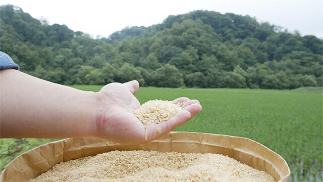 日本のお米イメージ